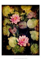 """13"""" x 19"""" Water Lily Pictures"""