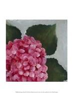 Hydrangea Detail II Fine Art Print