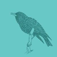 Starling Fine Art Print