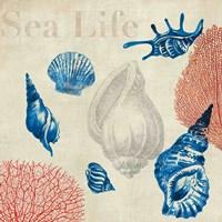 """Sea Life Study by Aimee Wilson - 13"""" x 13"""" - $11.49"""