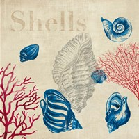 Shell Study by Aimee Wilson - various sizes