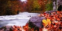 Autumn Flow Fine Art Print