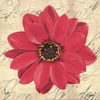 "Floral Dream IV by Debbie DeWitt - 12"" x 12"", FulcrumGallery.com brand"