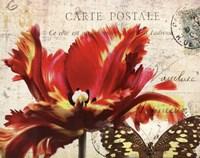 "Carte Postale Tulip I by Amy Melious - 14"" x 11"""