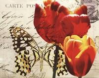 Carte Postale Tulip II Fine Art Print