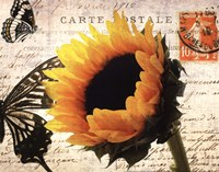 "Carte Postale Sunflower by Amy Melious - 14"" x 11"""