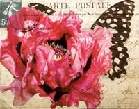 Carte Postale Poppy Fine Art Print
