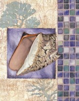 "Mosaic Shell Collage III - mini by Paul Brent - 11"" x 14"""