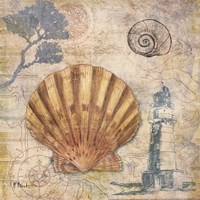 """Discovery Shell II by Paul Brent - 12"""" x 12"""", FulcrumGallery.com brand"""