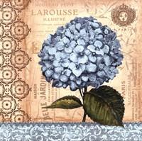 Hydrangea - mini Fine Art Print