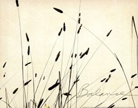 """14"""" x 11"""" Grass Pictures"""