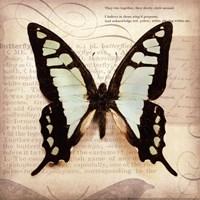 Butterflies Script I - mini Framed Print