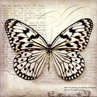 Butterflies Script III - mini Fine Art Print