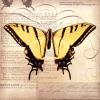 Butterflies Script V - mini Framed Print