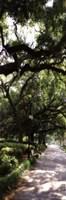 "Savannah Sidewalk Panel II - mini by Alan Hausenflock - 6"" x 18"" - $9.99"
