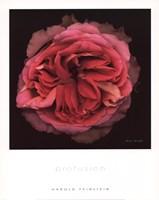 Profusion Fine Art Print