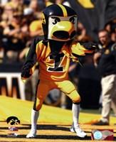 "Herky the Hawk, the University of Iowa Hawkeyes Mascot - 8"" x 10"""
