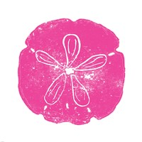 Pink Sand Dollar Framed Print