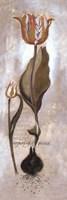 """Tulipa Violoncello V by Joseph Augustine - 8"""" x 24"""""""