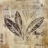"""Botanical Sketchbook I by Dennis Carney - 12"""" x 12"""""""