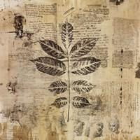 """Botanical Sketchbook II by Dennis Carney - 12"""" x 12"""""""
