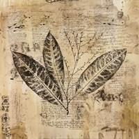"""Botanical Sketchbook I by Dennis Carney - 20"""" x 20"""""""