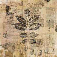 """Botanical Sketchbook II by Dennis Carney - 20"""" x 20"""""""