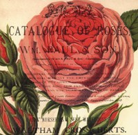 Roses III Fine Art Print