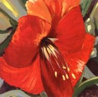 Tiare III Fine Art Print