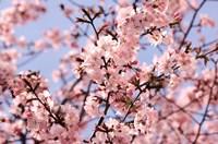 """Blossom Haze by Joseph Eta - 36"""" x 24"""""""