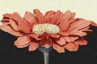 "Apricot Flame I by Linda Wood - 36"" x 24"""