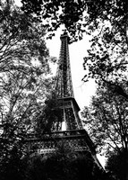 Paris Trees Fine Art Print