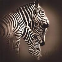 """24"""" x 24"""" Zebra Art"""