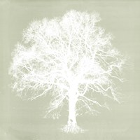 Dream Tree III Fine Art Print