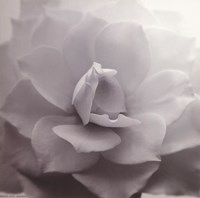 """Allure IV by The Chelsea Collection - 6"""" x 6"""""""