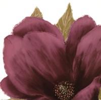 Grandiflora Blush II Fine Art Print