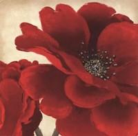 Red Peony I Fine Art Print