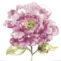 "Water Flower I by Wild Apple Portfolio - 18"" x 18"", FulcrumGallery.com brand"