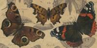 Bold Butterfly Panel I Framed Print