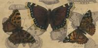 Bold Butterfly Panel III Framed Print