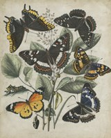 """Butterfly Haven II by Vision Studio - 26"""" x 32"""""""