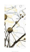 Willow Blooms I Fine Art Print