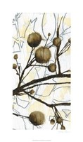 Willow Blooms II Fine Art Print