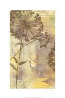 Dandelion Dance I Framed Print