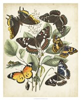 Non-Embellished Butterfly Haven II Framed Print