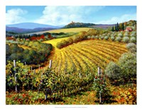 Chianti Vineyards Framed Print