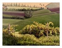 Chianti Hills Fine Art Print