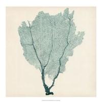 """Sea Fan I by Timothy O'Toole - 18"""" x 18"""""""