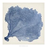 """Sea Fan V by Timothy O'Toole - 18"""" x 18"""""""