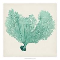 "Sea Fan VI by Timothy O'Toole - 18"" x 18"""